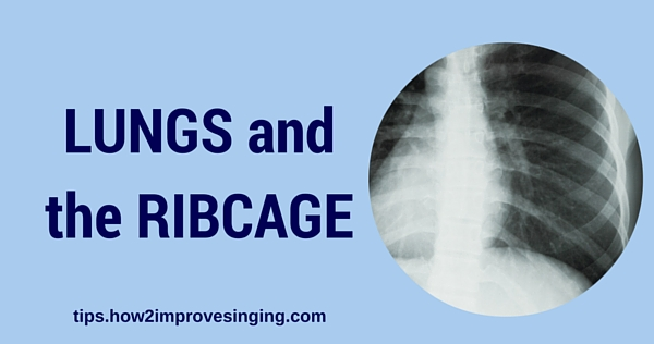 lungs and the ribcage