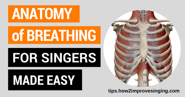 Anatomy of Breathing for Singers Made Easy | How 2 Improve